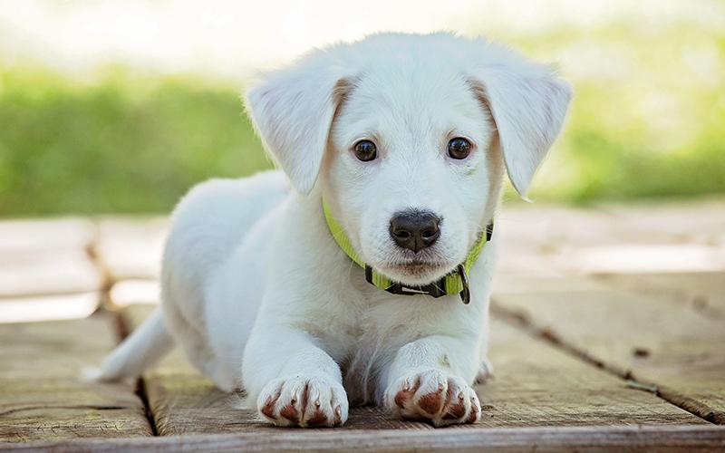 Beste personalisierte Hundehalsbänder