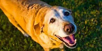 7 erstaunliche Möglichkeiten, Ihren abgegangenen Hund zu erinnern