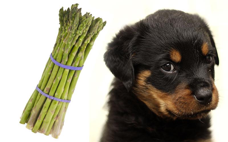 Können Hunde Spargel haben?