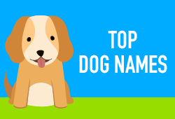 Top Dog Names von 2018 [Infografik]