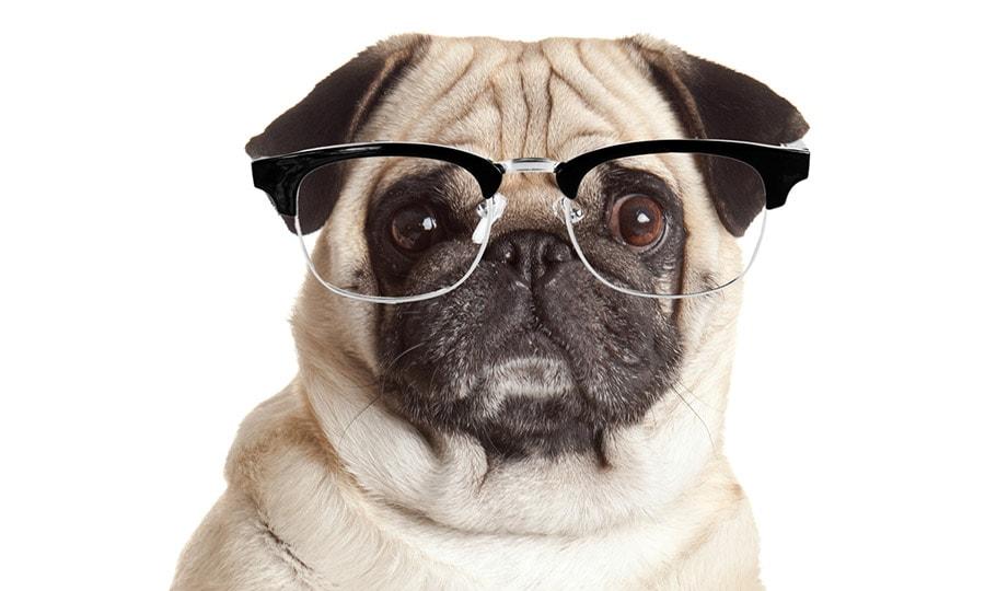 Nerdy Dog Names - tolle Namen für Ihren Welpen [Infografik]