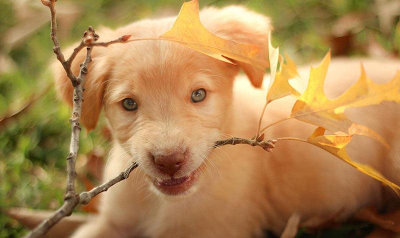 Reinrassige gegen Mutt - sind Mischlingshunde gesünder?