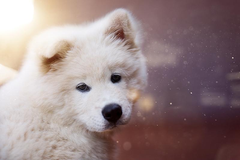 43 Flauschige Hundenamen, die wir lieben