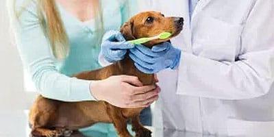 Dog Dental Cleaning: Wichtige Informationen, die Sie wissen müssen