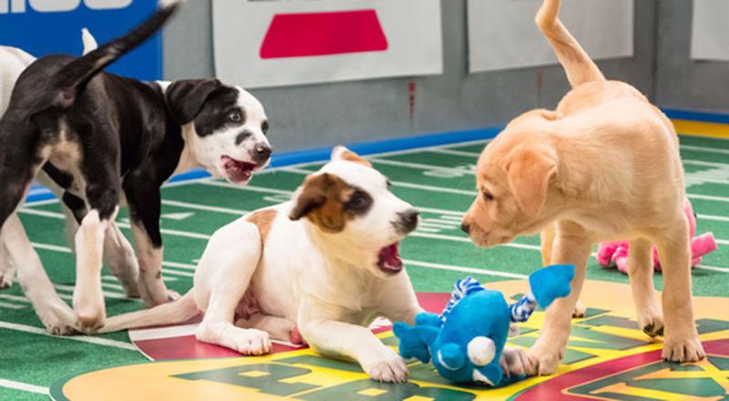 5 Möglichkeiten, Ihren Hund in die Fußballsaison aufzunehmen