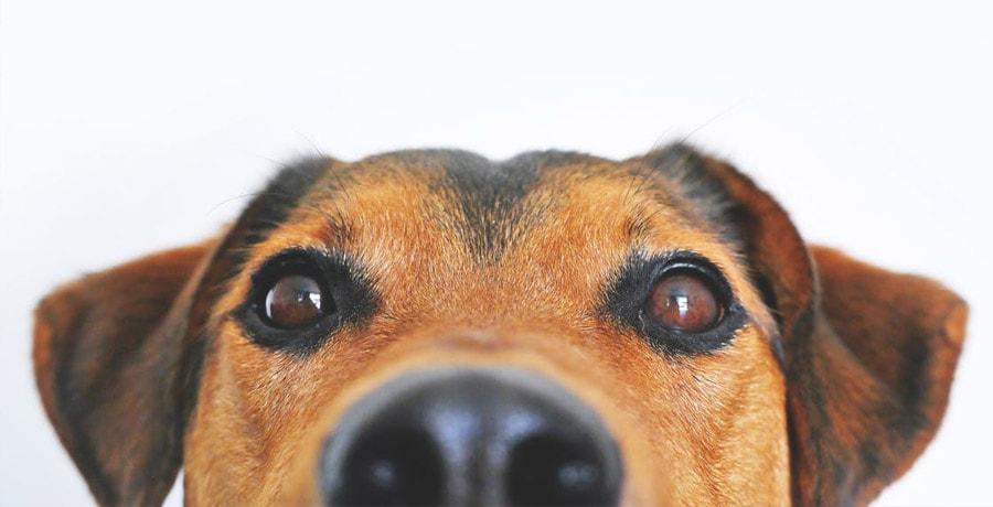 5 Möglichkeiten, völlig eindeutige Hundenamen zu finden und kreativ zu sein!