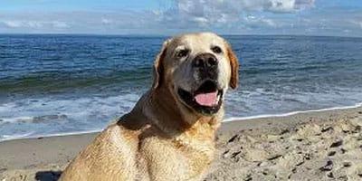 10 einfach erstaunliche Gründe, für Hunde dankbar zu sein