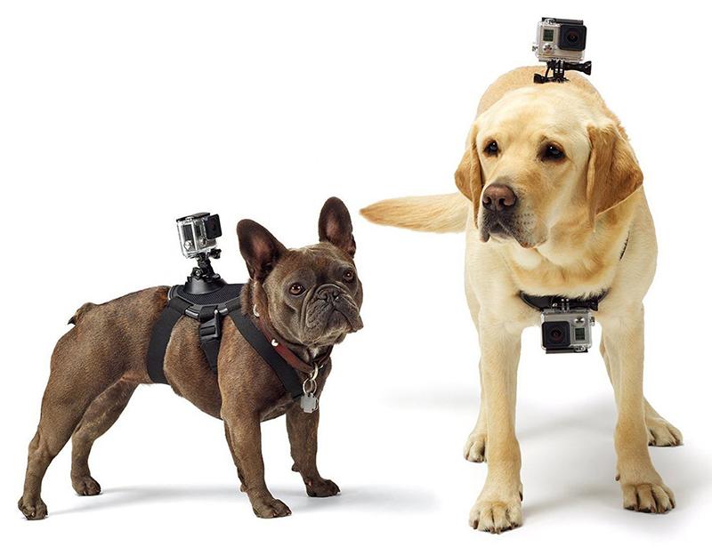 Top-Hightech-Gadgets für Hunde