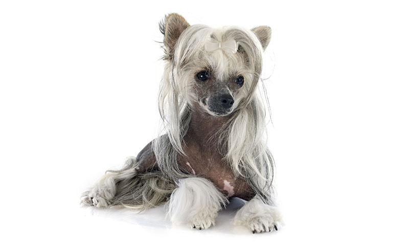 9 unglaubliche afrikanische Hunderassen, die Sie treffen müssen