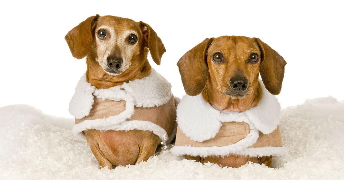 Kleine Hundemäntel: Die am besten gekleideten Petite Pooches