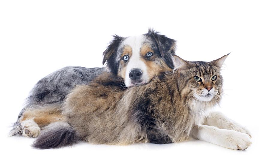 Katzen gegen Hunde: Wie man ihnen hilft, zusammenzukommen