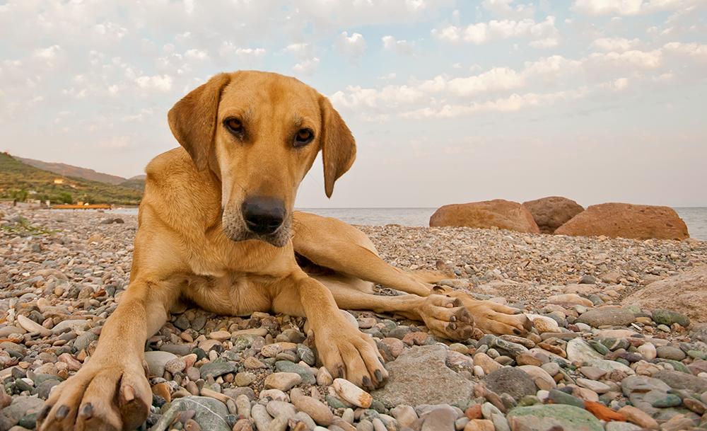 Der Niedergang der Dominanztheorie im Hundetraining