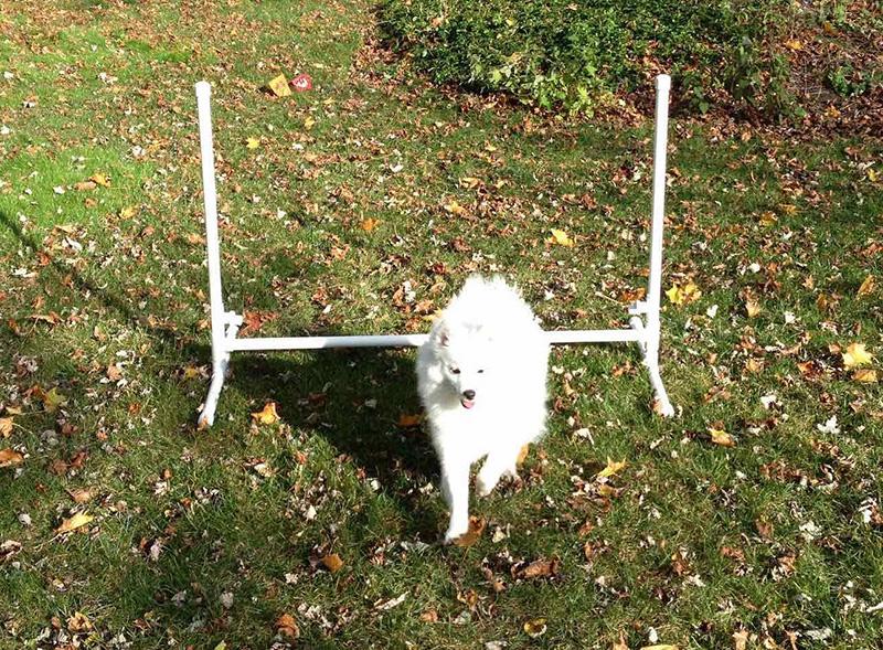 10 Genius DIY Hundespielzeug, die verrückt sind einfach