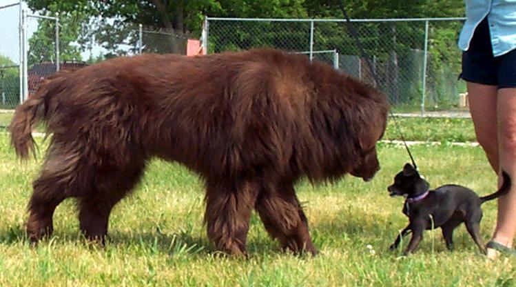 10 Dinge, die nur Menschen mit großen Hunden verstehen werden