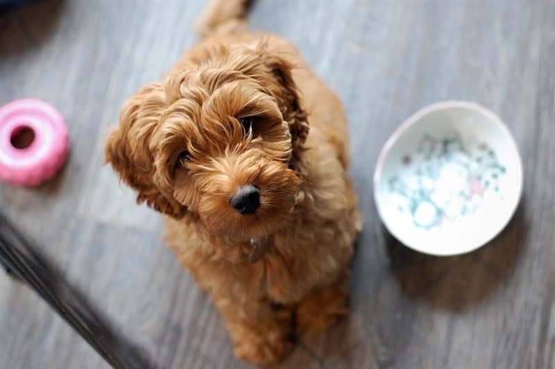 Können Hunde Grünkohl essen?