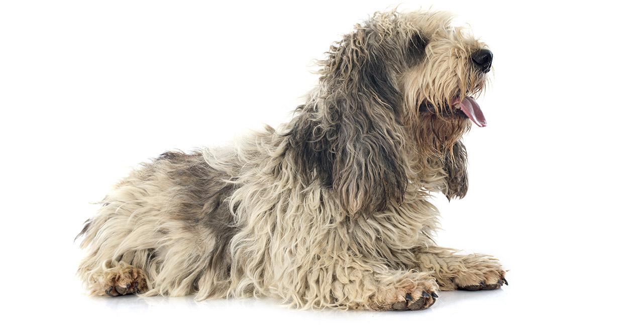 Best Pet Odour Eliminator