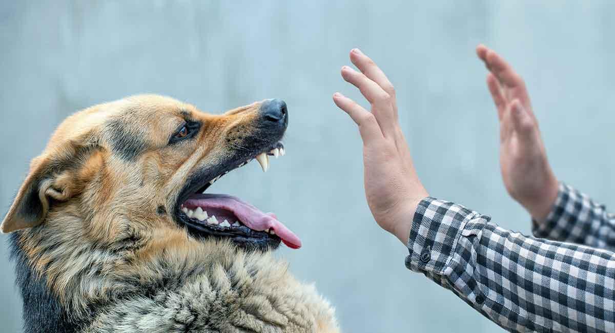 Hundebissbehandlung für Menschen und Hunde