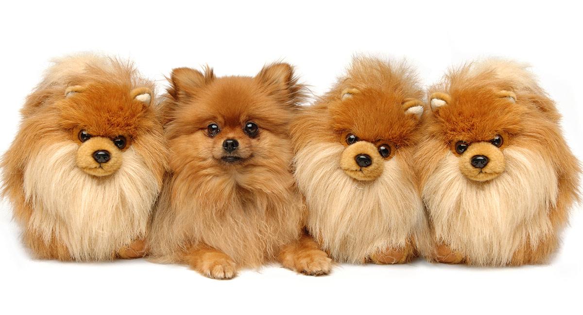 Teddybär-Hunderassen