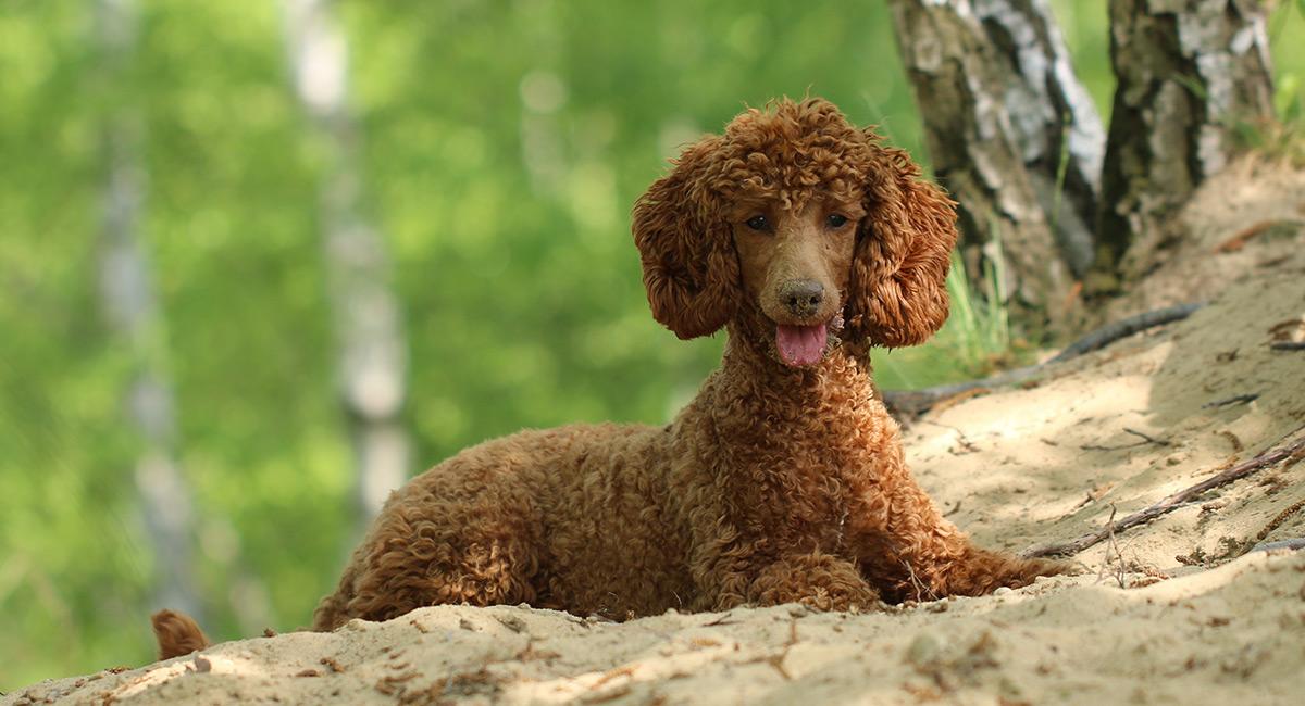 Kieselgur für Hunde
