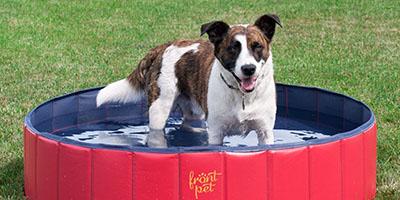 10 Dinge, die Ihr Hund diesen Sommer braucht