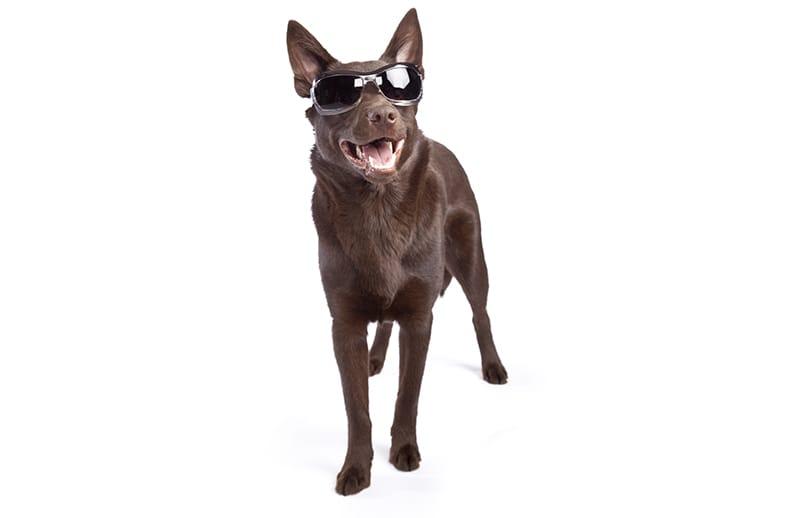 Badass Dog Names - 60+ harte und zähe Ideen