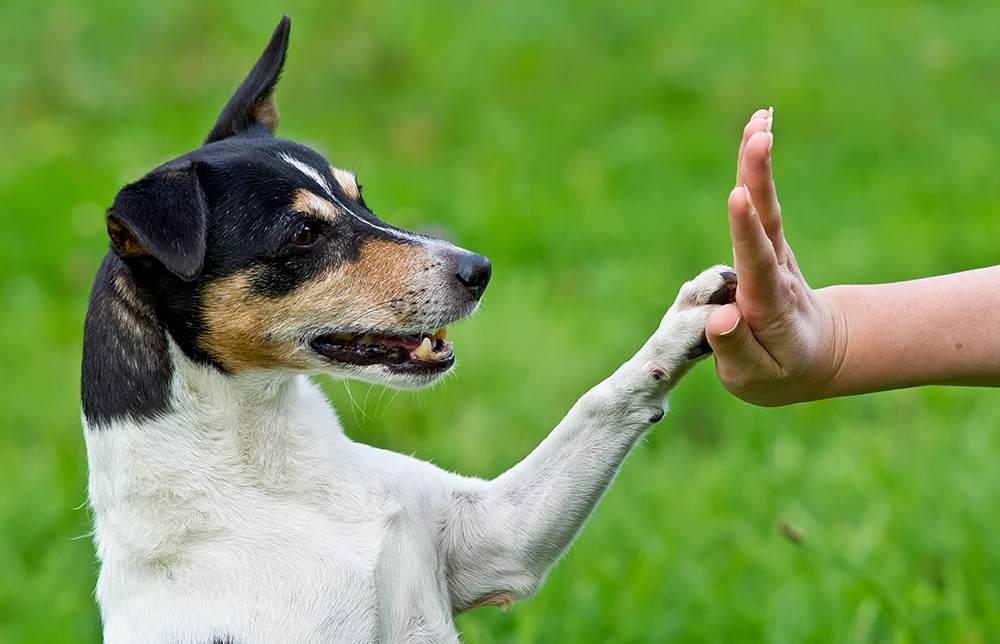 Ereignismarkierungen im Hundetraining