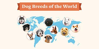 Hunderassen der Welt [Infografik]