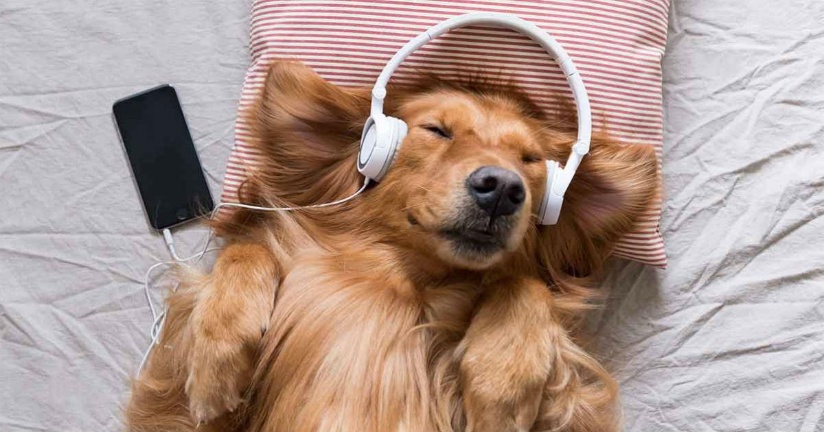 Hunde mögen Musik? Oder würden sie eher die Stereoanlage abschalten?