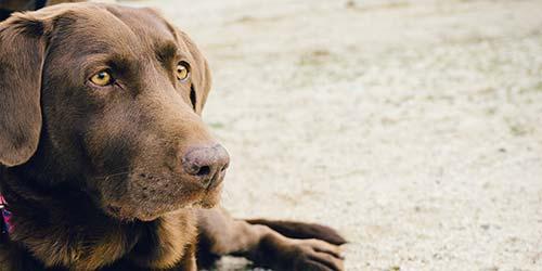 Große Ideen für männliche Hundenamen