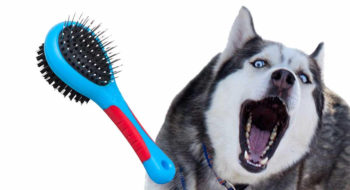 Bester Pinsel für Schlittenhunde und ihre flauschigen Mäntel