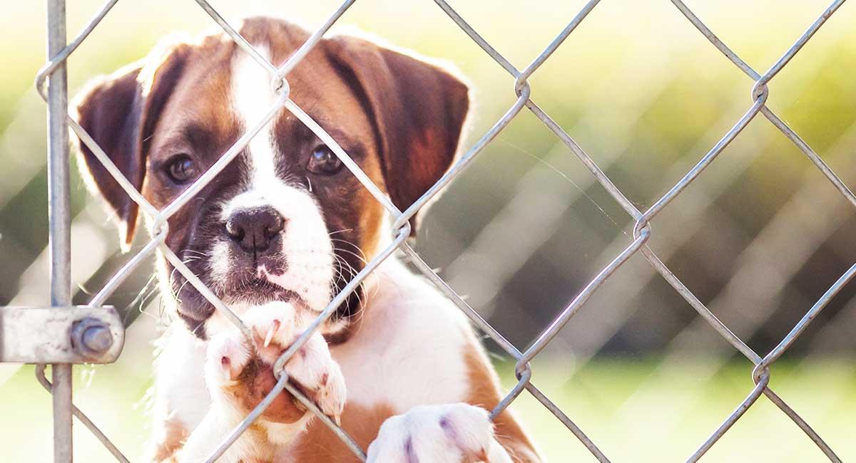 Trennungsangst bei Hunden - Ihren Hund lehren, allein zu sein