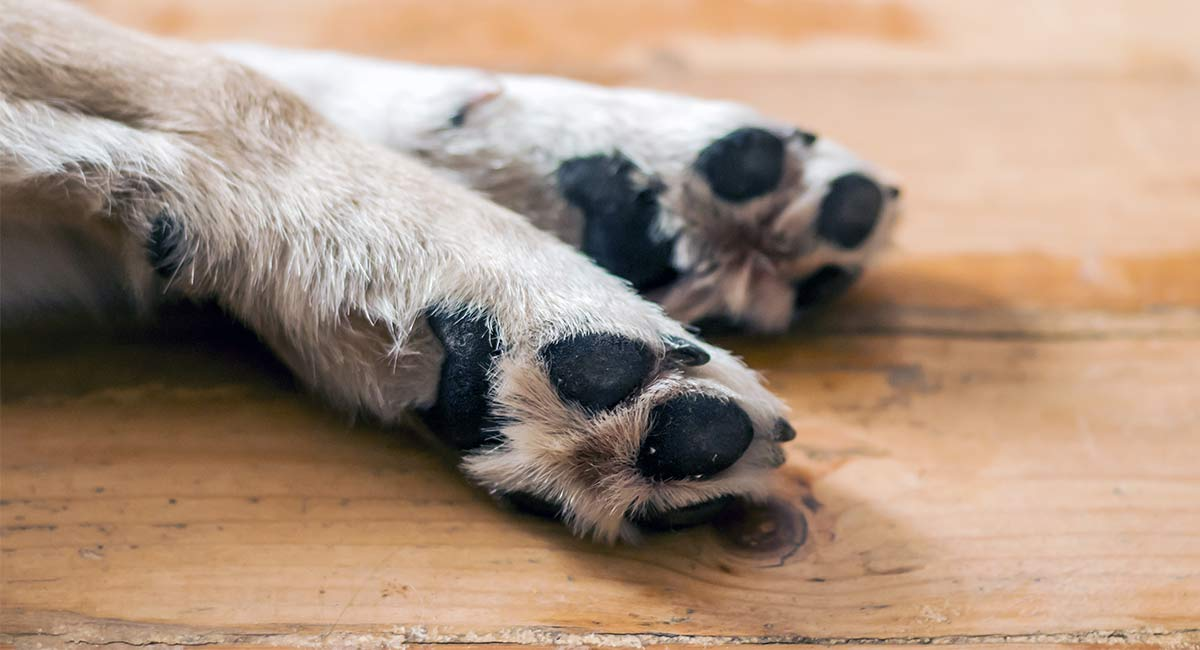 Wie kann man verhindern, dass der Hund eines Hundes schnell und sicher blutet?