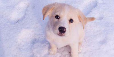 4 Tipps zum Suchen von niedlichen Hundenamen