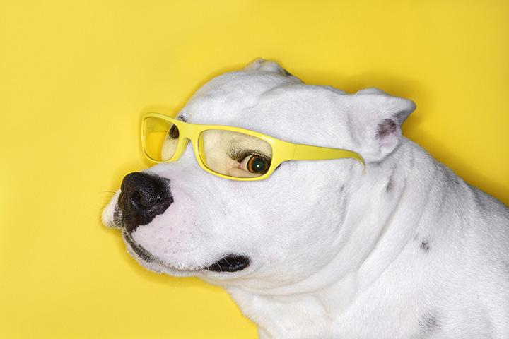 Top Trendy Dog Names - Perfekte Namensideen für Ihren Welpen