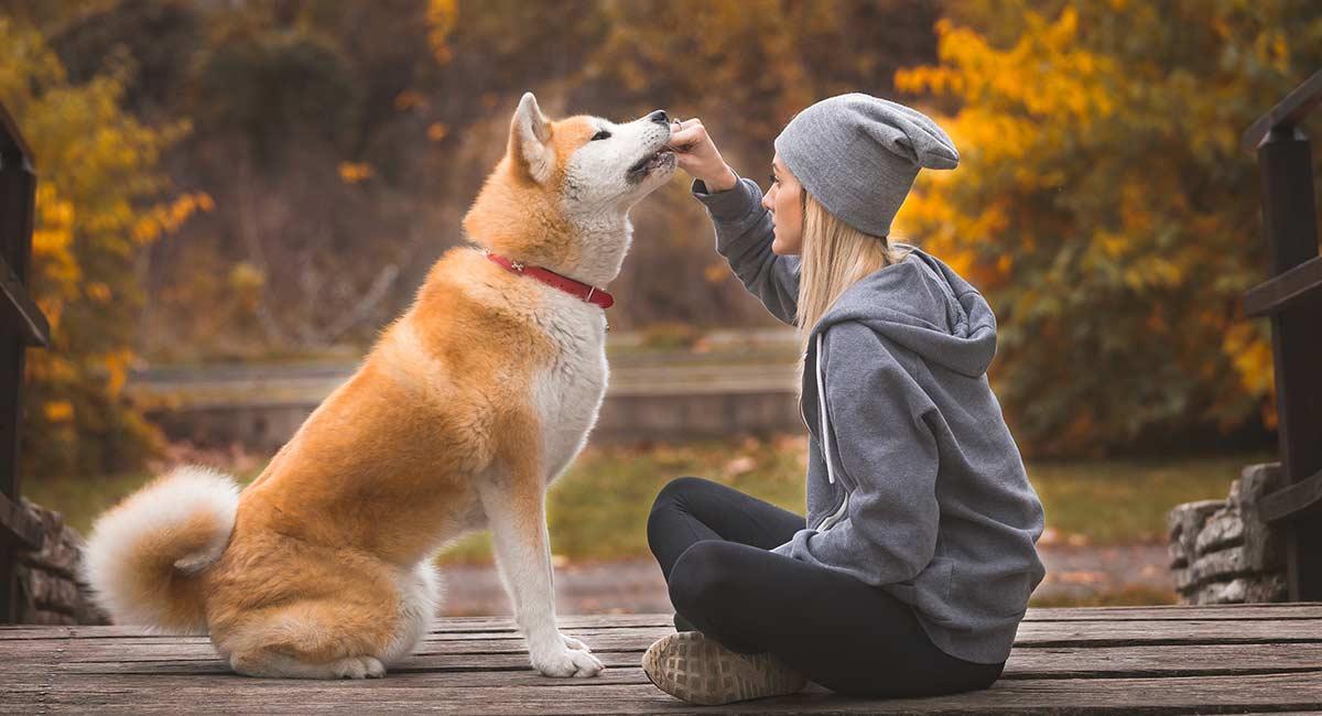 Akita-Namen - perfekt für Ihren exotischen Hund