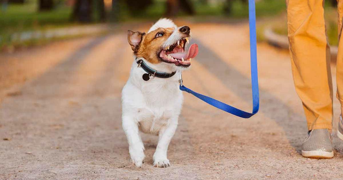 Loose Leash Walking: Ein erfahrener Leitfaden für einen entspannten Spaziergang