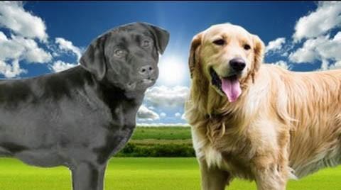 Faule Hunderassen - Ein Leitfaden für Hunde mit niedriger Energie